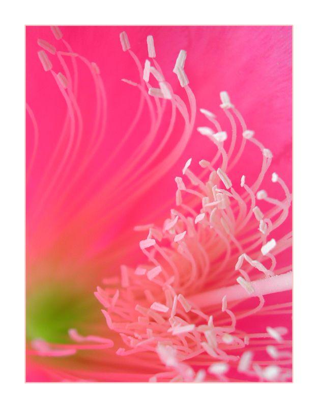 Pink Surf II by ~wolfskin on deviantART