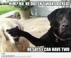Cute Funny Memes For Him : Funny clean quotes google search cute animal videos and photos
