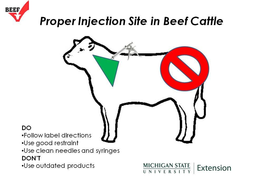 Beef Quality Assurance and Beef Checkoff programs