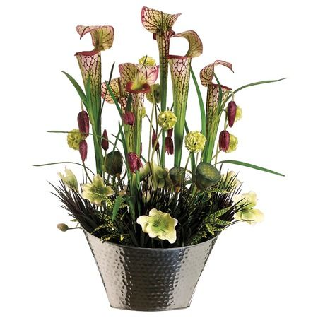 I Pinned This Pitcher Plant Lily Helleborus And Pod Silk
