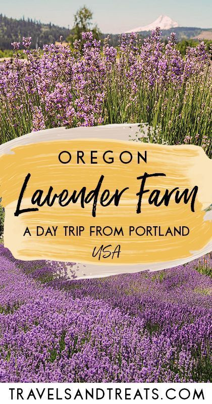 There are a number of beautiful lavender farms in Oregon. Take an easy day trip from Portland, Oregon to Hood River Lavender Farms.