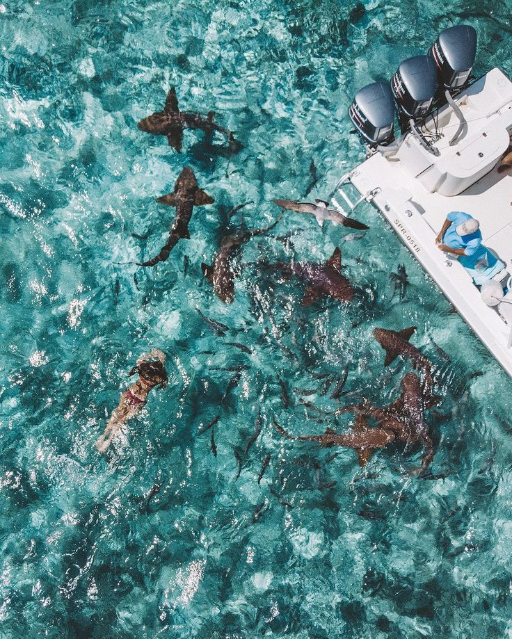 Private Planes, Swimming with Sharks, and Living the Dream