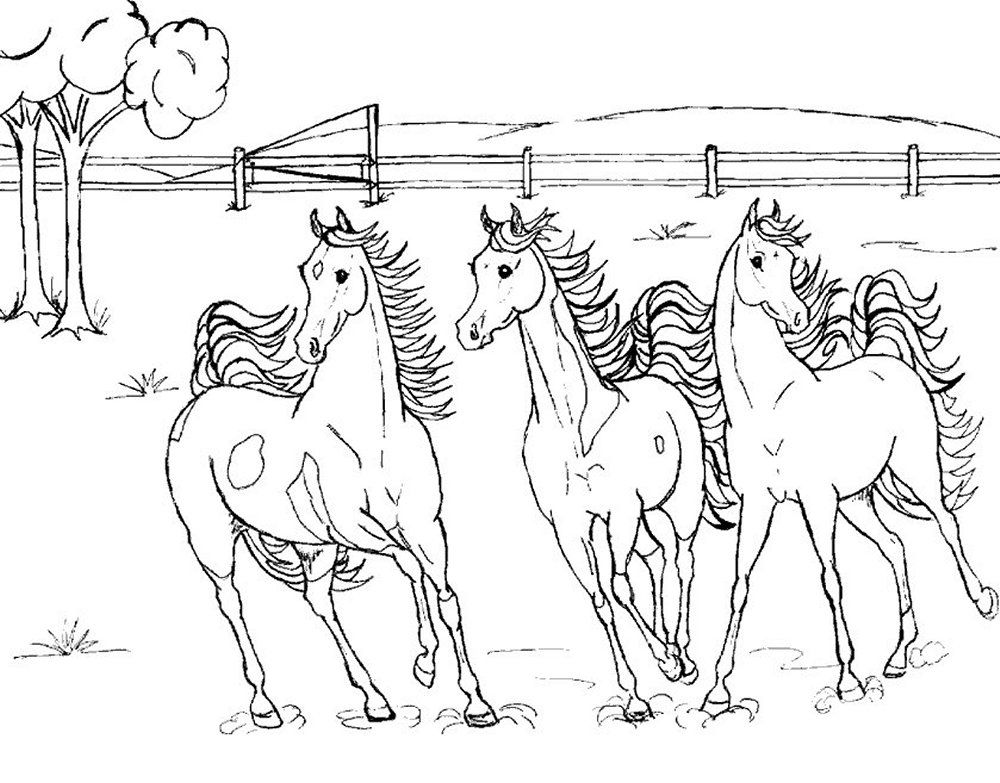 Three horses roaming wildhorse coloring pages  BIG BANG FISH