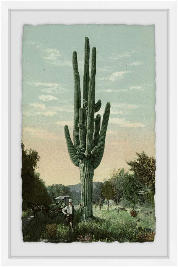 Lofty Cactus (Framed Giclee) By Marmont Hill At Gilt