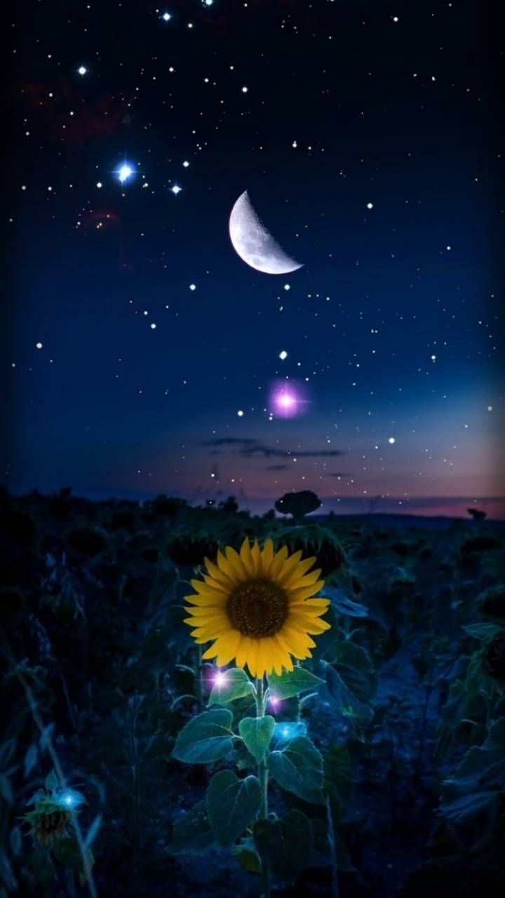 Download Starry Night Wallpaper By Hende09 Cb Free On Zedge Now Browse Millions Of Popular Nice Wallpap Pemandangan Abstrak Fotografi Alam Ilustrasi Alam