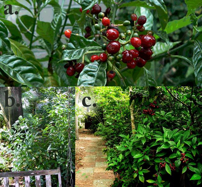 Florida Native Plants Nursery