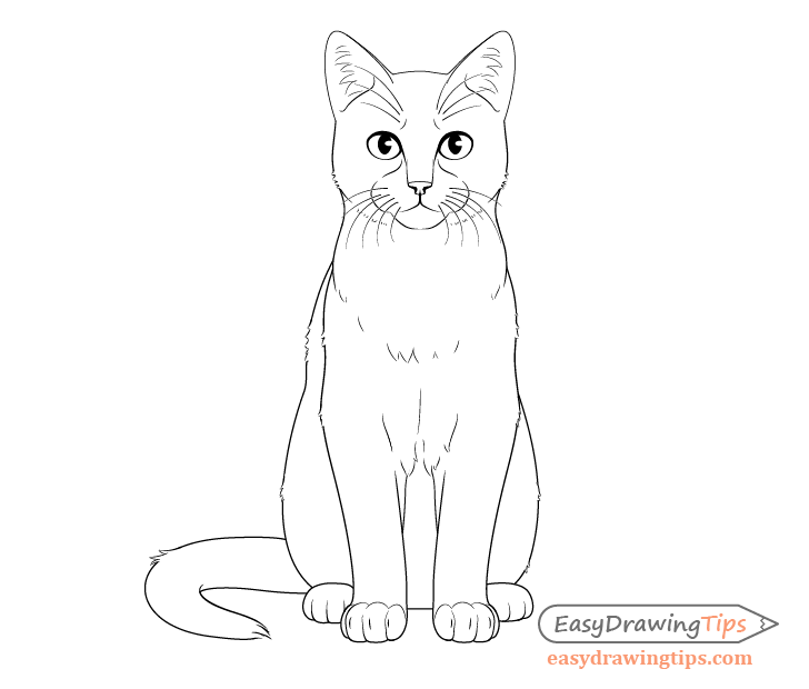How To Draw A Cat Step By Step From Front View With Images Cat