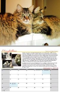 Our beautiful 2015 fundraising calendar makes a nice gift for any cat-lover. All proceeds go directly toward helping our rescued kitties. From Dec 2014 to Jan 2016, there are 14 months of fabulous felines and their unique stories of rescue. These calendars are just $20 each, and can be mailed to you at no extra charge within the USA. Order soon -- we sell out every year! Please click the link or the photo to place your order. http://mainecoonadoptions.com/calendar2015.shtml