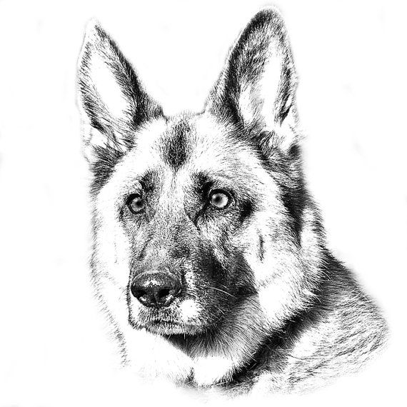 Dog Realistic Puppy Coloring Pages 1540 Best Coloring