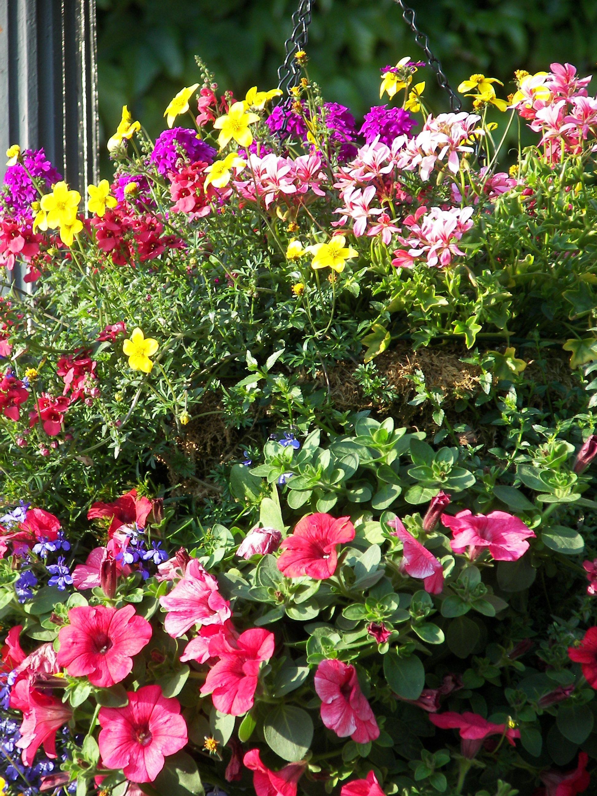 Alaska plants flowers outdoor