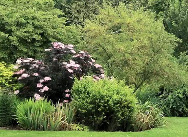 comment dessiner les massifs du jardin