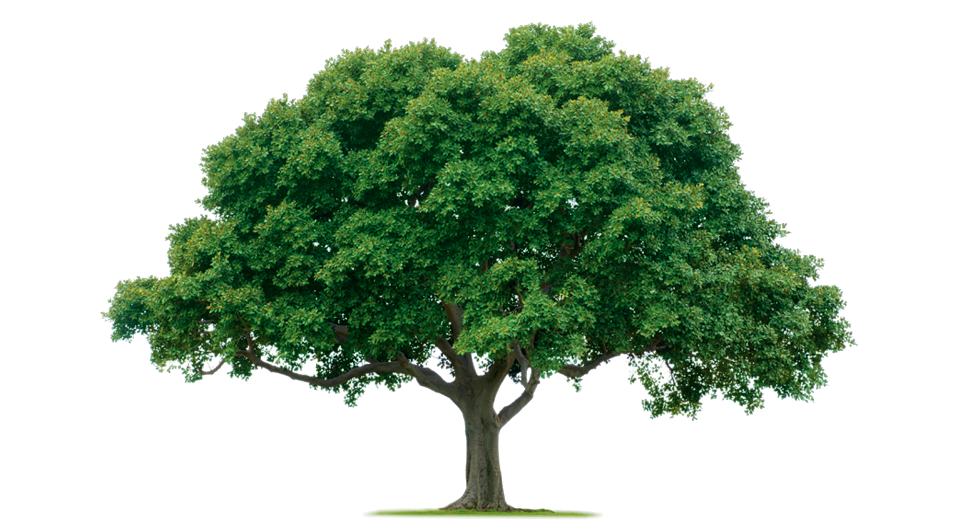 Descartes Berkeley And Functional Reactive Programming In 2021 Tree Removal Nature Tree Tree