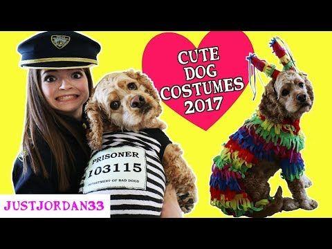 Justjordan33 Youtube Cute Dog Costumes Dog Costumes