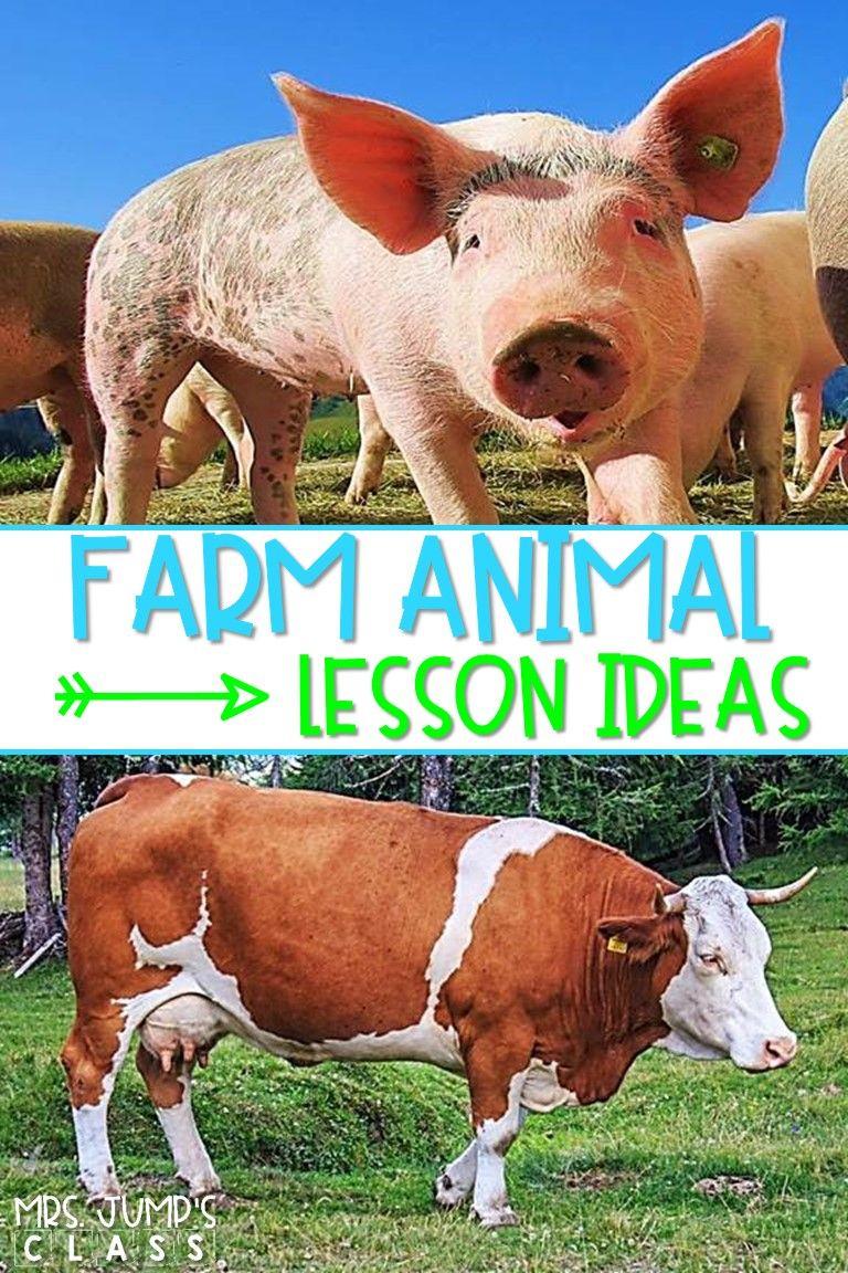 Fun on the Farm Learning About Farm Animals Animal