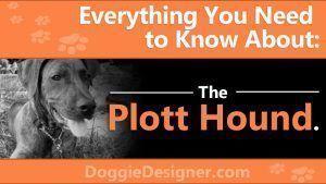 The Plott Hound: A Complete Guide #plotthound The Plott Hound: A Complete Guide #plotthound The Plott Hound: A Complete Guide #plotthound The Plott Hound: A Complete Guide #plotthound The Plott Hound: A Complete Guide #plotthound The Plott Hound: A Complete Guide #plotthound The Plott Hound: A Complete Guide #plotthound The Plott Hound: A Complete Guide #plotthound The Plott Hound: A Complete Guide #plotthound The Plott Hound: A Complete Guide #plotthound The Plott Hound: A Complete Guide #plott #plotthound