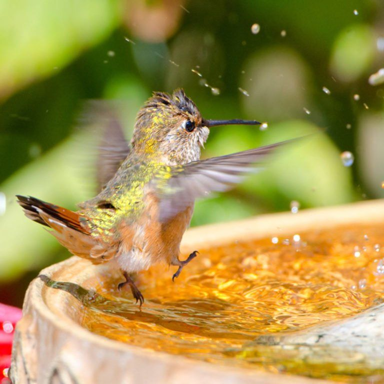 Beyond Feeders 5 More Ways to Attract Hummingbirds in