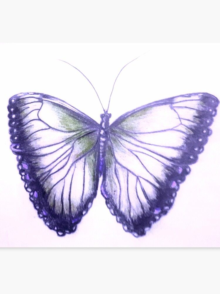 Gorgeous Purple Butterfly Canvas Print By Limitless2 Redbubble Butterfly Canvas Purple Butterfly Canvas Prints