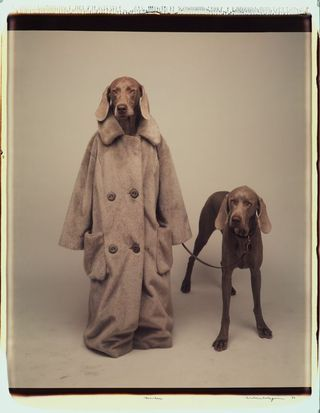 William Wegman : Fashion Photographs: Ingrid Sisch, William 21