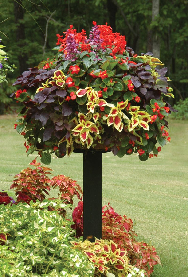 Nice Border Pot On A Post Featuring Red Salvia Coleus