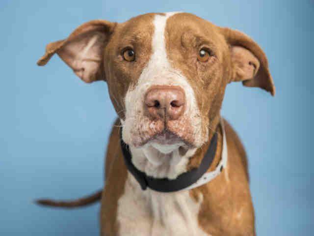 Dogs Day In The Garden Puppy Adoption Humane Society Dog Adoption