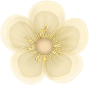 creme_flower3.png