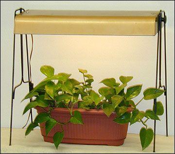 lighting for houseplants. Terrific Explanation Of Lighting Houseplants And Understanding Footcandles. For P
