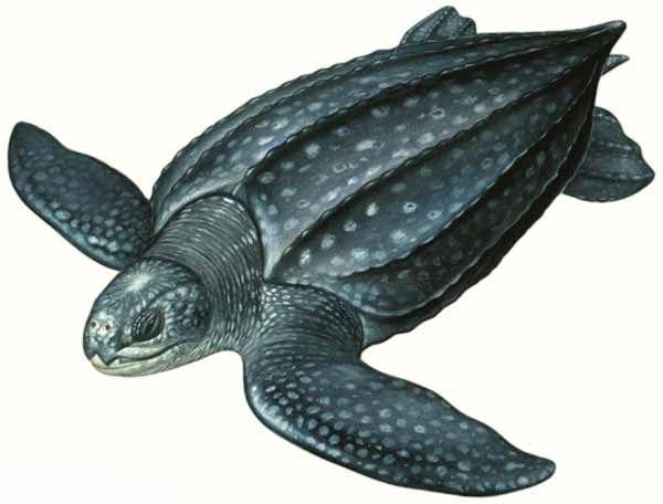 Ilustraciones Inbio Buscar Con Google Ilustraciones Tortugas Ilustracion Cientifica