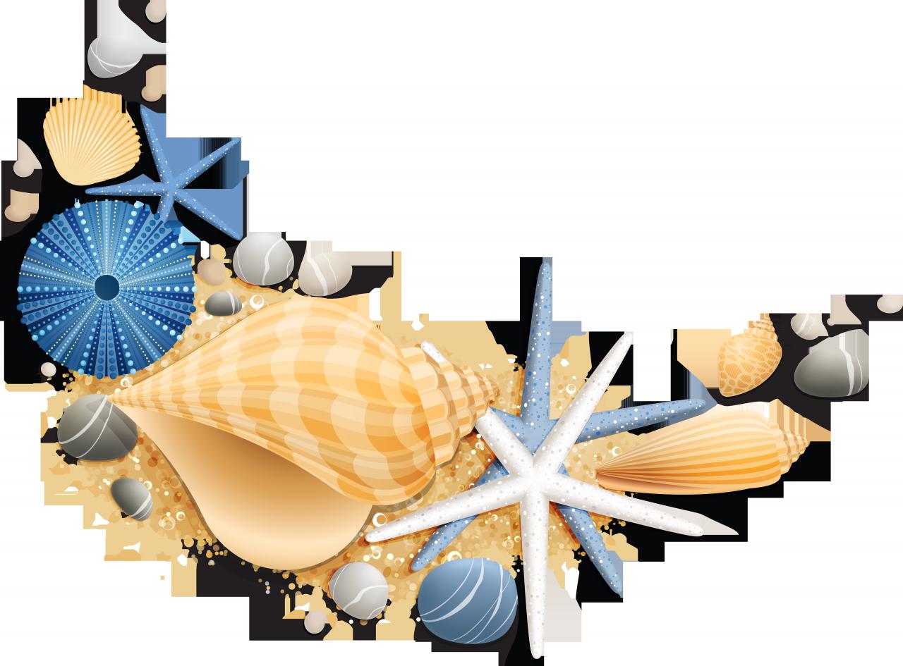 Обои Звезда, лето, Seashells, пляж, summer, ракушки, wood, доски, beach, starfish. Разное foto 5