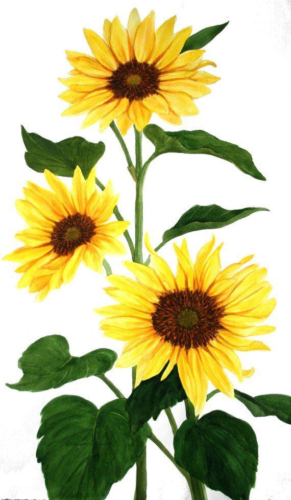 Sunflowers Original Watercolor 2' x 3' by Wanda Zuchowski ...