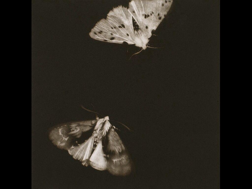 Nacht vlinders