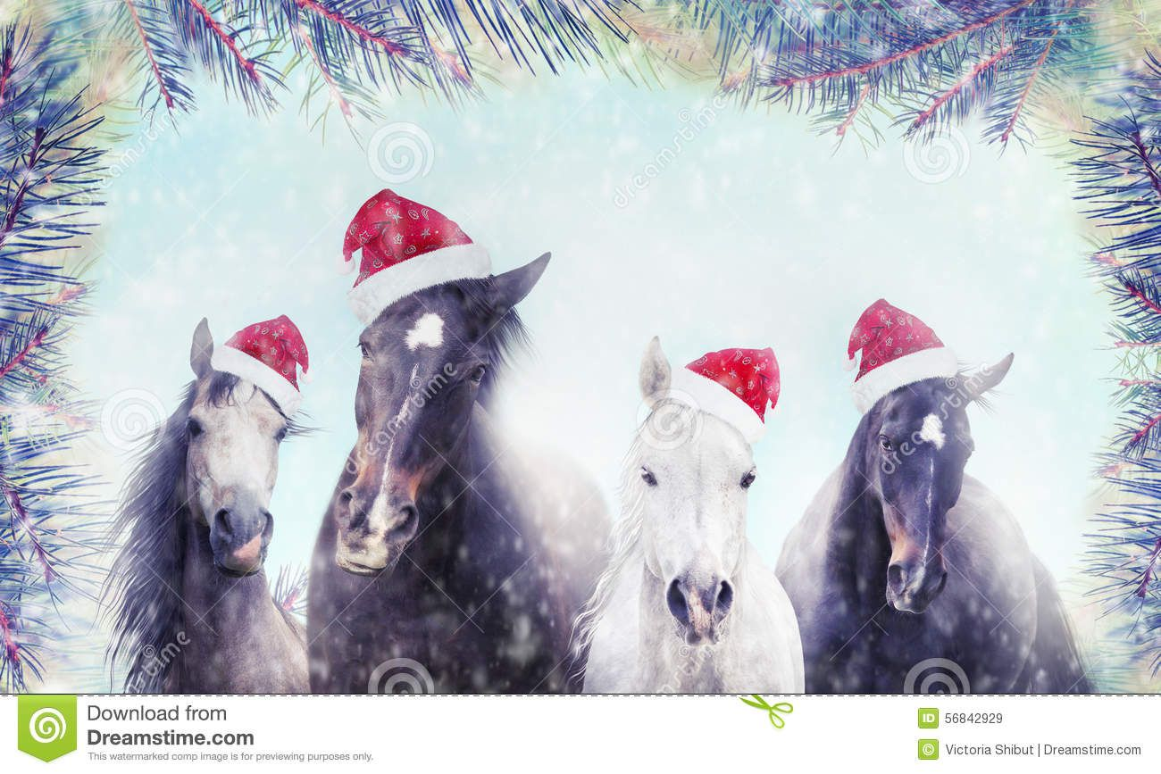 Image result for horse christmas cards | Christmas | Pinterest ...