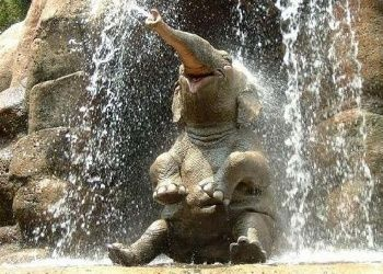 Android Phones Wallpapers Android Wallpaper Baby Elephant Happy Animals Cute Animals Happy Elephant