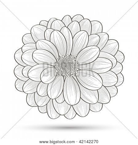 Chrysanthemum Drawings For Tattoos Chrysanthemum Drawing Chrysanthemum Pictures Chrysanthemum Drawi Chrysanthemum Drawing Chrysanthemum Tattoo Flower Tattoos
