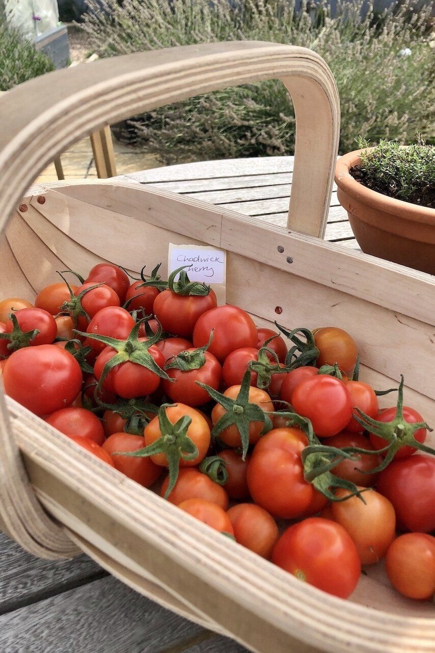 how to save tomato seeds to plant next year