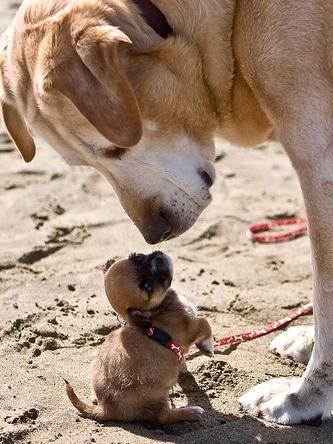 Kleiner und Großer Hund