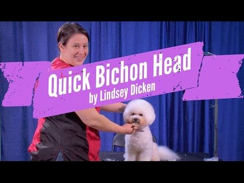 Bichon Head Grooming Demo By Lindsey Dicken Bichon Pet Grooming Grooming