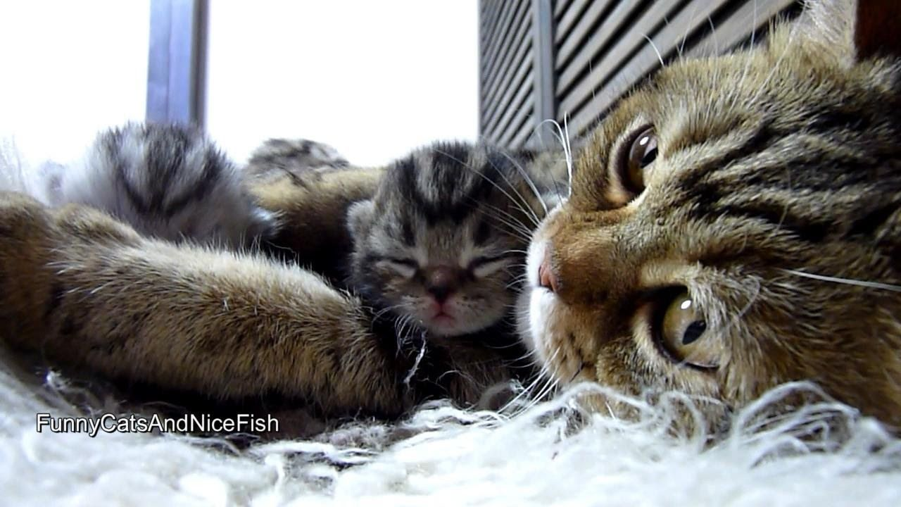 Purr Fect Video Amazing Mother Cat And Cute Baby Meowing Funny Kittens Baby Kittens Cat Mom Kittens Funny