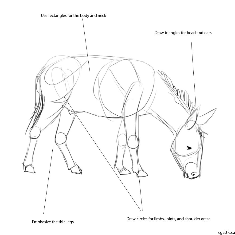 Realistic Donkey Drawing in 4 Steps With Photoshop in 2019