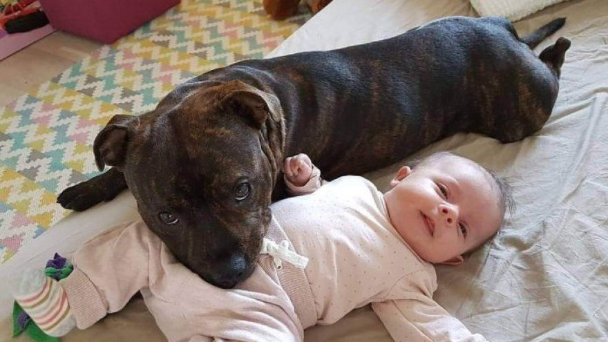 Best Dog Breeds For Kids And Their Safety Babies Stuff