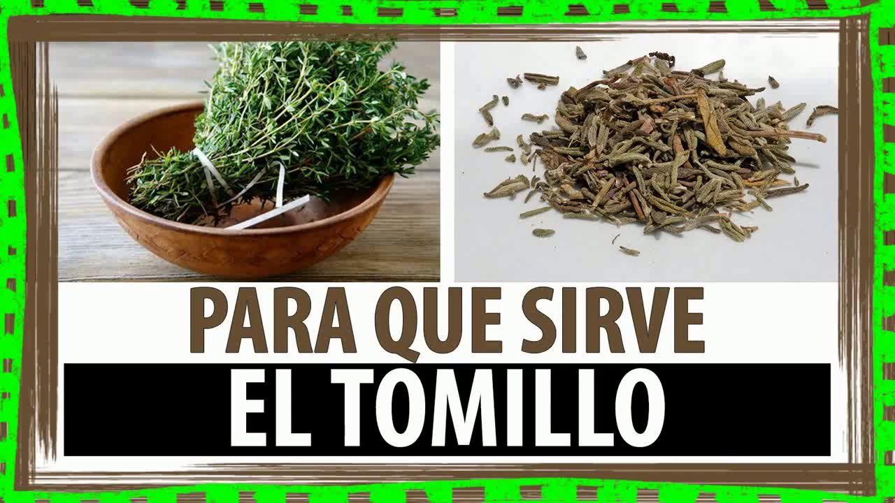 cdd8222c2 Pin de Roxana Astorne en Salud   Te de tomillo, Tomillo planta y ...