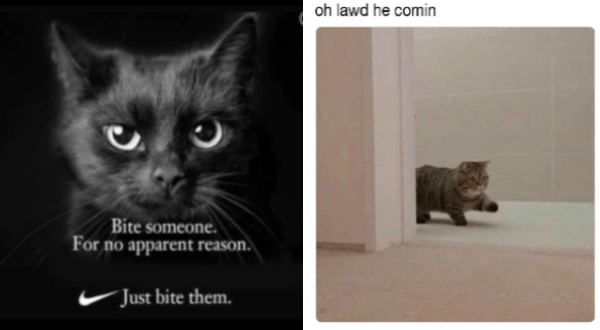 You Have Decided Here Are The Best Cat Memes Of The Decade 100 51 Best Cat Memes Cat Memes Funny Cat Memes