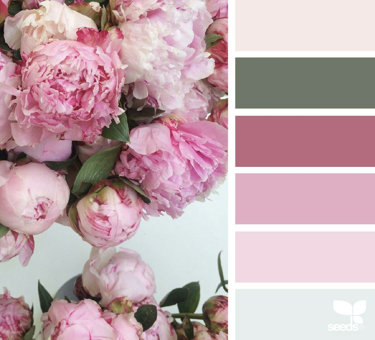 Pin by Eva Cooper on Paint colors   Pinterest   Peony, Color ...
