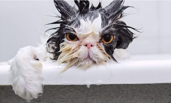 Happy Caturday Laugh At These Wet Cats With Images Funny Animals
