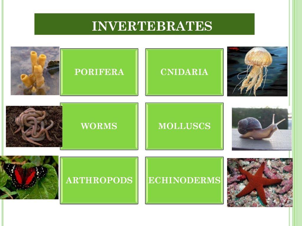 Unit 5 Invertebrates