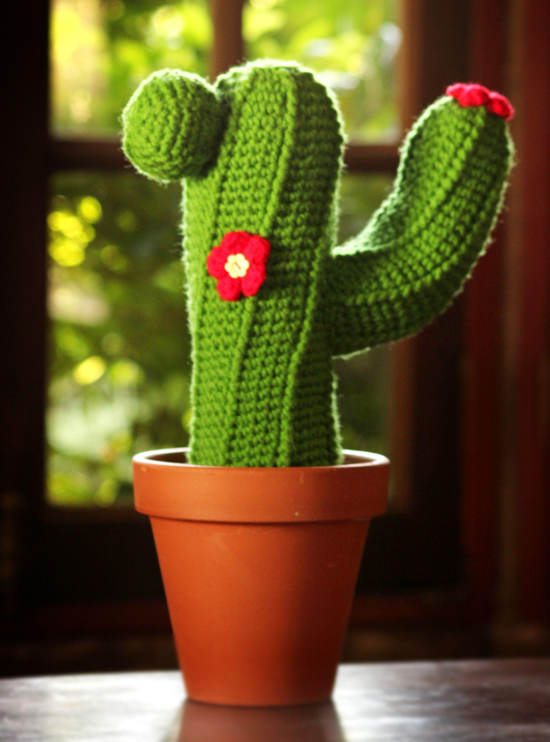 Amigurumi Cactus Tejiendo Peru : Google, Cactus and Amigurumi on Pinterest