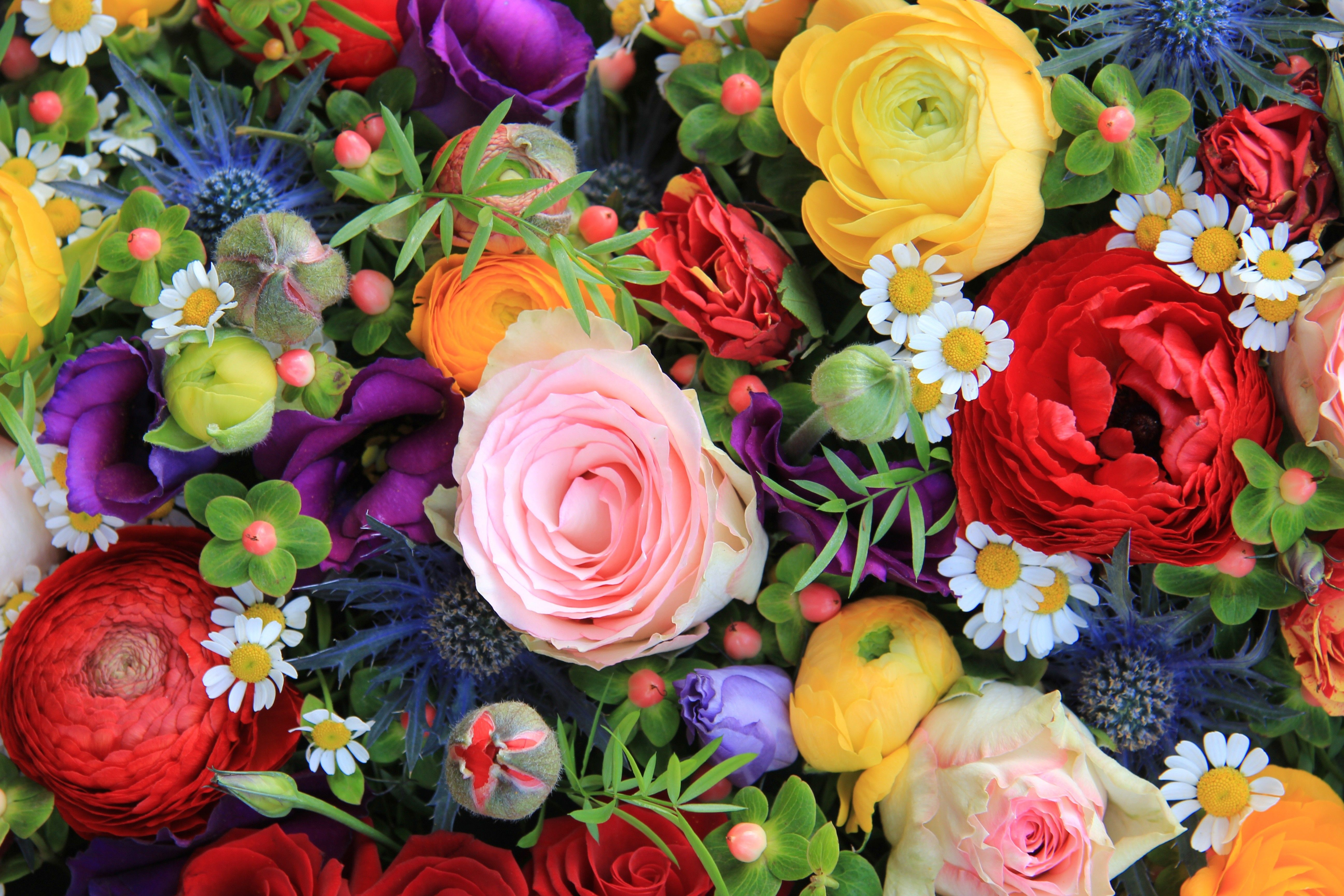 Flowers Colors Spring Colorful Flowers Time Roses Petals Nature Beautify Rose Beautiufl Love Pretty Flower Pretty Flowers Background Flowers Beautiful Flowers