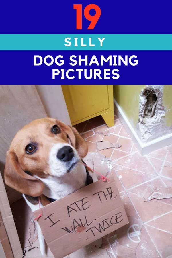 19 Silly Dogshaming Images A Quick Way To Smile Barking Laughs