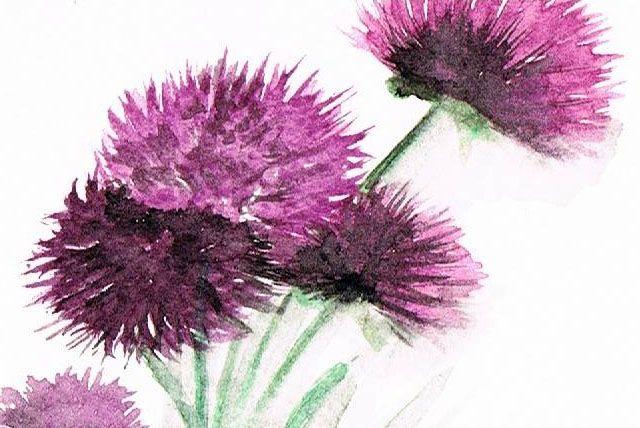 Settembrini fiori frutta in acquerello flowers fruit - Settembrini fiori ...