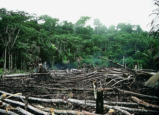 Rainforest deforestation, Peru.jpg (640×462) | Hugh Baird Whats ...
