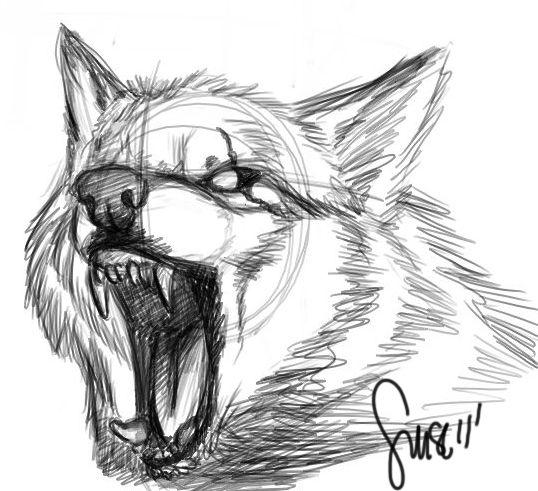 Wolf Growl Sketch By Werewolfsense On Deviantart Wolf Sketch Wolf Drawing Animal Drawings